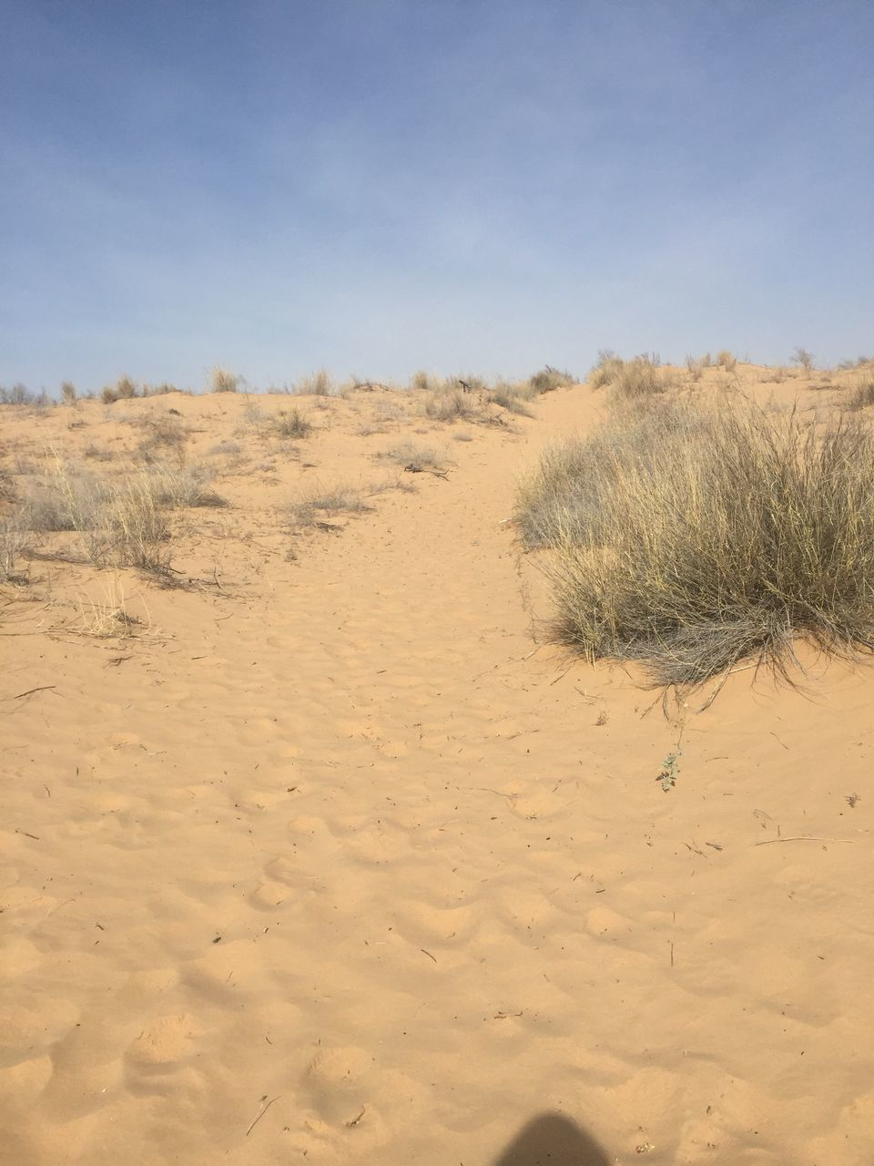 sand, nature, tranquility, landscape, tranquil scene, sand dune, day, sky, scenics, outdoors, arid climate, beauty in nature, no people, desert, beach, clear sky, tree