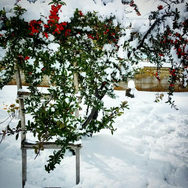 Snow White Cold Winter ❄⛄ Flowers Trees Colourful Snow Holidays  Konya Turkey Awesome
