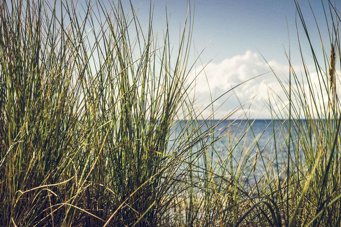 the view through the grass Baltic Sea Balticsea Landscape Photography Nature Photography Sky And Clouds Beach Beauty In Nature Close-up Day Grass Growth Horizon Over Water Landscape Landscape_photography Marram Grass Nature No People Outdoors Plant Scenics Sea Sky Tranquil Scene Tranquility Water