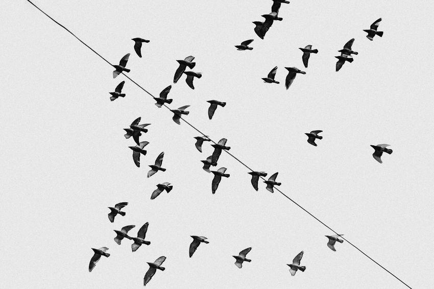 Minimalism Shanghai China Blackandwhite Sky Bird