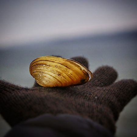 I was shooting at the see when a bird let this fall from above... Neubrandenburg LoveMyWork it might be I'm too Romantic but I'm fine with it... Shell Muschel seaside tollensesee winter