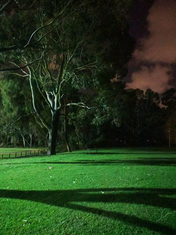 Tree Grass Green Color Night Growth Nature Beauty In Nature No People Outdoors Tranquility Sport Sky Cloud - Sky Pixel Photography Tree Shadows And Backlighting EyeEm Selects Nightwalk Nightlight Shades Of Nature Shadow Play Shadows & Lights