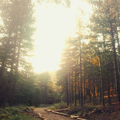 Ormanlar, girin ve içlerinde dolaşın. Huzuru bulacaksınız çam kabuğunun üstüne basıp geçerken. Güneş başka vurur o ormanlara, mutlu olacaksınız. VSCO Vscogoodshot Be_vsco Vsco_dream Vscocam Vscogood Follow Photo Tree Mountainb Impossible Ss L4l Instagram Insta