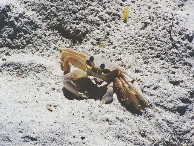 Beach Sand Crab nature Sea Life