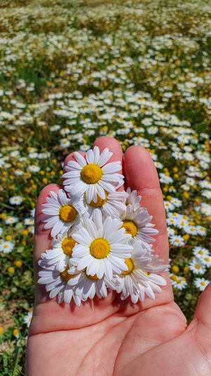 Close-up of hand holding flowering plant