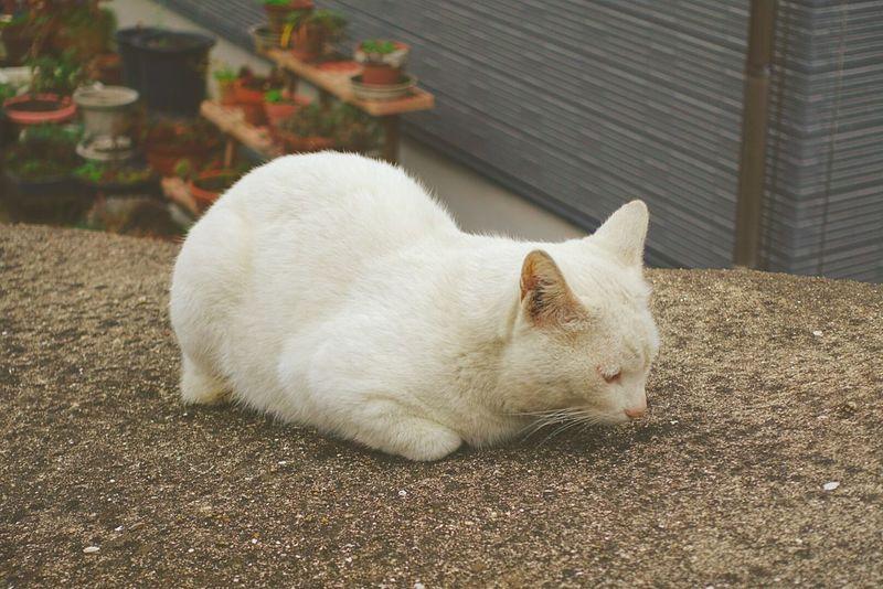 前足が埋ってるところが可愛い💕お餅みたい🎵One Animal Outdoors Close-up No People Feline Day Animal Themes Zzz Animals In The Wild White Animal Photography Cute Cat ねこ 猫 野良猫 のらねこ部 ZzZzZz Cats Hello World Cat♡ Pets Taking Photos もち