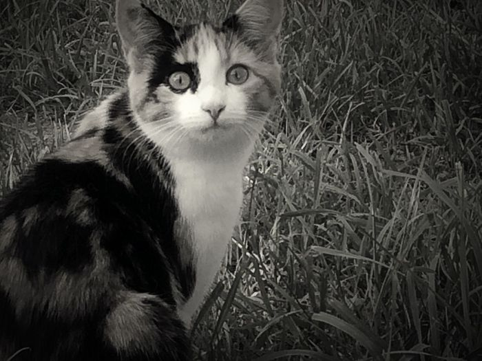 Cat Monochrome Black And White Katzen Animals Tadaa Community IPhoneography Blackandwhite Monoart Shades Of Grey