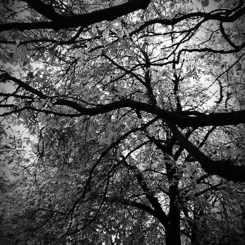The leaves has left the tree Black And White Stockholm View