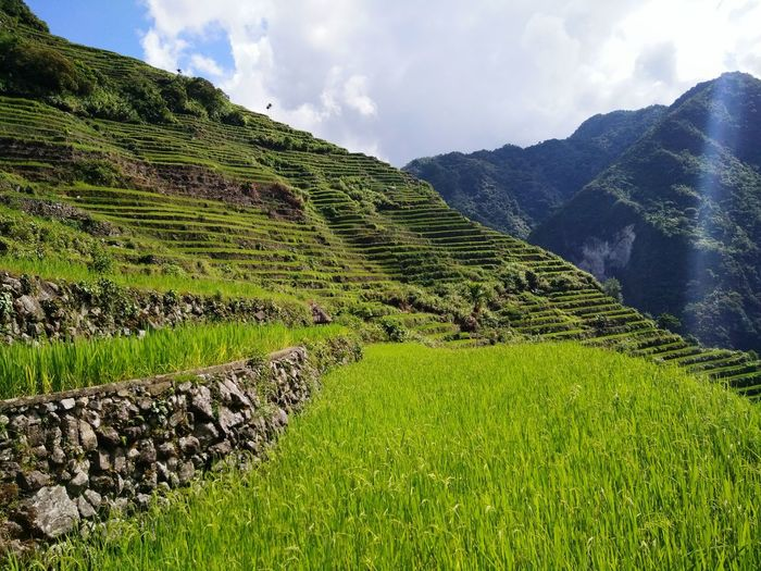 the most beautiful rice terraces in the world Rice Mountain Rice Fields  Mountain View Travel Rice Paddy Farm