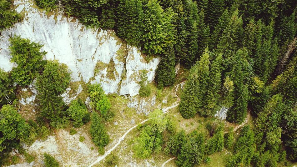 Aerial Shot Outdoor Outdoors, Outside, Open-air, Air, Fresh, Fresh Air, Romania Mountains Carpathian Mountains Carpathians Aerial View Aerial Photography Aerial Road View Trees WoodLand Pinaceae Mountain Road Full Frame Backgrounds Tree High Angle View Grass Green Color Plant Textured