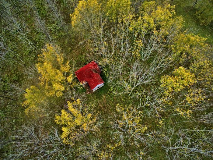 High angle view of tree trunk in forest