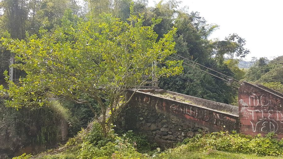 Trees growing by railroad track in forest