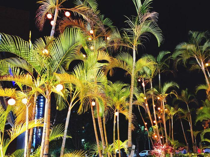 林磷 Night Plant No People Tree Growth Illuminated Low Angle View
