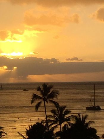 Palm Trees 🌴 Pacific Ocean Sky Pacific Sky Pacific Pacific Ocean View Island Of Oahu, Hawaii Oahu / Hawaii Oahu, Hawaii Oahu Island Tropical Island Tropical Paradise Tropics Pacific No People Ocean No Edit/no Filter Boat Pacific Sunset An Eye For Travel The Great Outdoors - 2018 EyeEm Awards