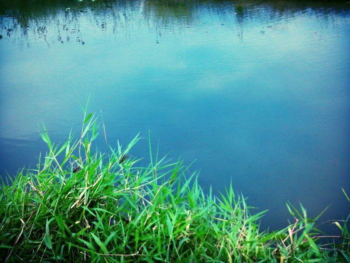 Grass, water