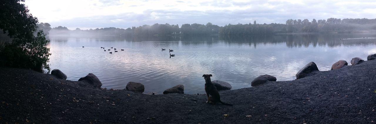 Fog Hund Doglovers Dogmodel Dogs Life Dogphoto Dogslife Lakeside Lake See Rubbenbruchsee