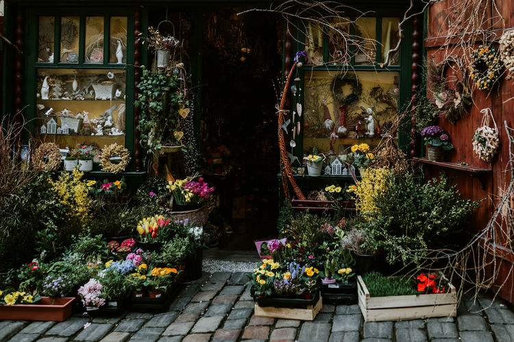 Plant Flowering Plant Flower Potted Plant Retail  Choice Variation For Sale No People Store Market Nature Architecture Growth Large Group Of Objects Built Structure Arrangement Day Abundance Business Outdoors Sale Retail Display Flower Pot Flower Arrangement Prague Prague Czech Republic