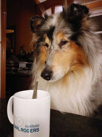 Tea Time Pets Dog One Animal Domestic Animals Indoors  Animal Themes No People