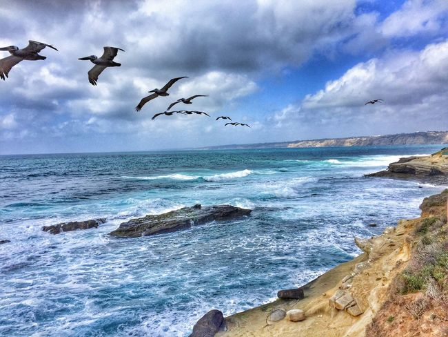 La Jolla, California Sea Sky Bird Flying Cloud - Sky Water Beauty In Nature Horizon Over Water Nature Scenics Animal Themes Animals In The Wild Day No People Spread Wings Outdoors Motion Large Group Of Animals Flock Of Birds Wave La Jolla, California La Jolla Cove Storiesbydebbie EyeEmNewHere