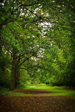 Forest Path Forest Walk Nature Portrait Landscape Trees Beauty In Nature Landscape The Way Forward Walk In The Woods