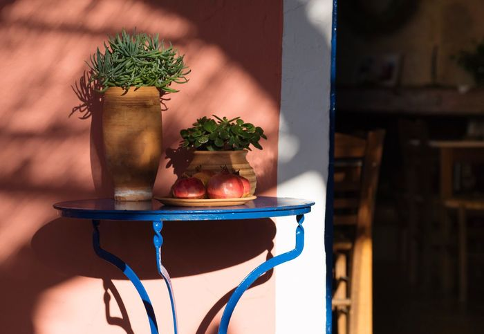 Afternoon cafe Succulent Aloe Vera Plant Pomegranates  Blue Table Kafeneio Cafe Potted Plant No People Indoors  Table Close-up Plant Growth Day