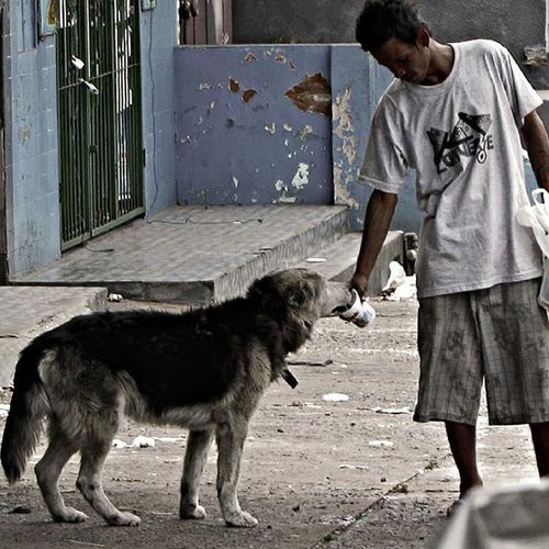 Street Streetphotographer Streetphotos Man Animals City Dog Asunción Great_captures_paraguay Paraguay Peoples