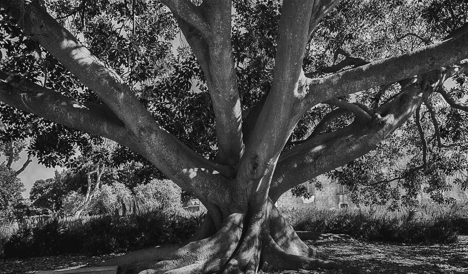 ⚫⚪ Tree Day Outdoors Nature Growth Close-up Beauty In Nature Low Section Shadow Picture Nature Blackandwhite No Colors Style Photography Photographer Edit Filtered Image