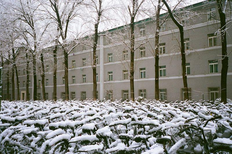 China Snow Cold
