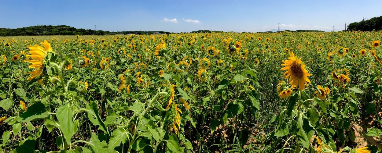 Plant Growth Field Beauty In Nature Land Sky Flower