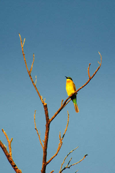 My favorite wildlife photo in Corregidor laten last Oct 0213. Wildlife Photography Wildlife & Nature Birdwatching Nikon