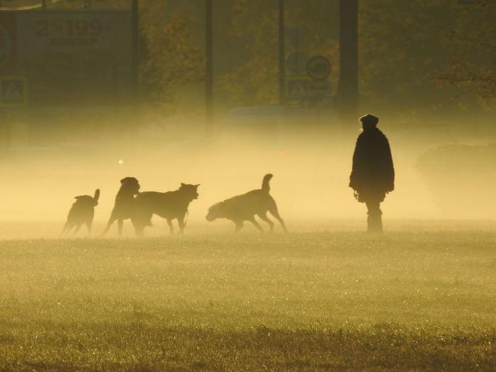 Silhouette man with dogs on grassy field during foggy weather