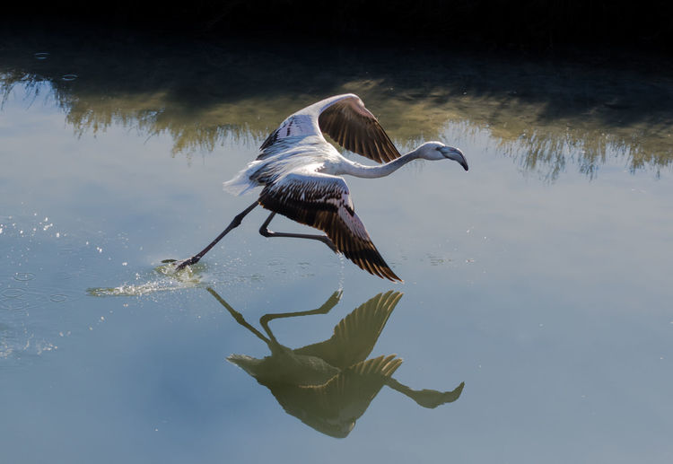 Side View Of Bird With Reflection In Water