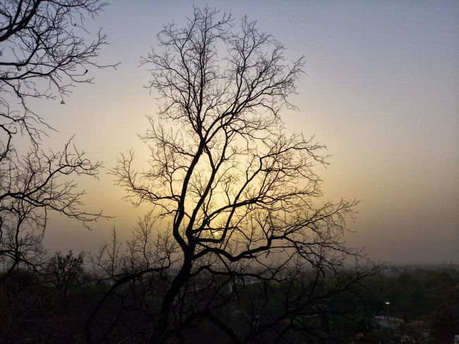 Sunset Sunlight Sunset_collection Tree Sky Plant Beauty In Nature Sunset Bare Tree Nature Tranquility Branch Silhouette Scenics - Nature No People Tranquil Scene Idyllic Outdoors Sun Growth Clear Sky Sunlight