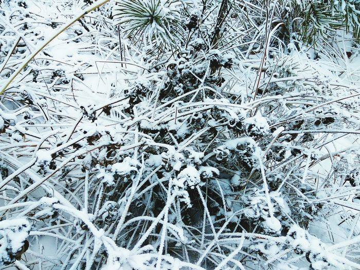 Backgrounds Full Frame Abstract White Color Textured  Pattern No People Winter Close-up Cold Temperature Snow Nature Day Wintertime Winter Frosty Frosty Grass Snow ❄ Nature Beauty In Nature Frosted Glass Frosty Nature Surface Level Textured  Textured  Shades Of Winter