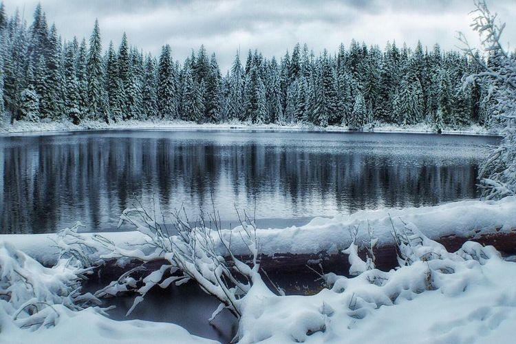 Cold Temperature Tree Nature Winter Beauty In Nature Tranquility Snow Water Ice Frozen Lake No People Frost Tranquil Scene Scenics Day Sky Outdoors Growth Landscape