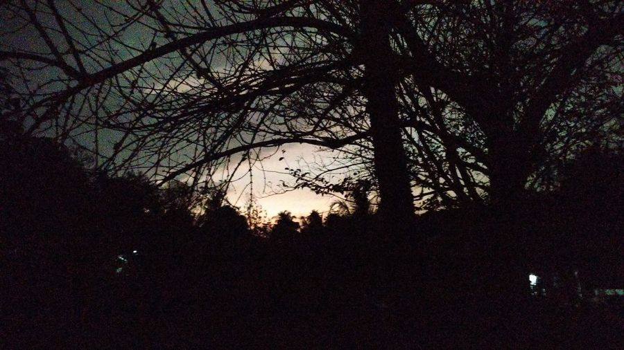 Sunset Trees Shdow Sky And Branches Dark Live For The Story Mi4iclicks