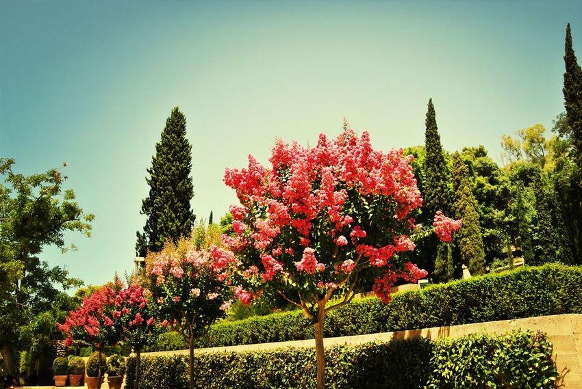Trees Rose Tree Landscape