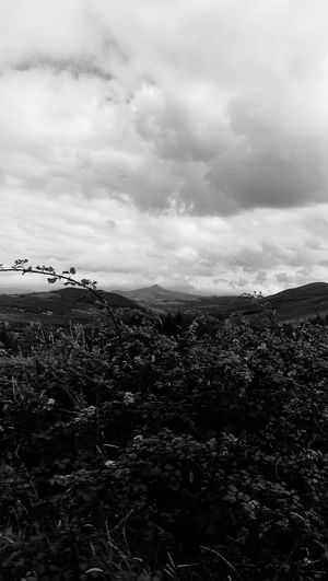 Cloud - Sky Landscape Nature Outdoors Outdoor Pursuit Sky No People Scenics Beauty In Nature Day Tree Grass Blackandwhite Photography Rural Scene Freshness Beauty In Nature Plant Beauty Flower Tree Mointain Huawei Photography Storm Cloud