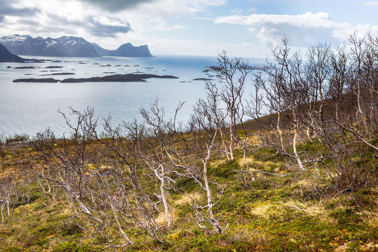 landscape view of Senja Island in Norway Barents Sea, Northern, Senja Island, Arctic, Atlantic, Coast, Cold, Europe, Fishing, Fjord, Harbor, Holiday, Ice, Landscape, Mountains, Nature, Nordic, North, North Sea, Norway, Norwegian, Ocean, Outdoor, Polar Circle, Port, Scandinavia, Sea, Seascape, Sky, Spring, Summer, Tourism, Travel, Village, Water Sky Beauty In Nature Scenics - Nature Water Tranquility Cloud - Sky Tranquil Scene Plant Nature Mountain Land Non-urban Scene No People Day Sea Tree Grass Outdoors Idyllic