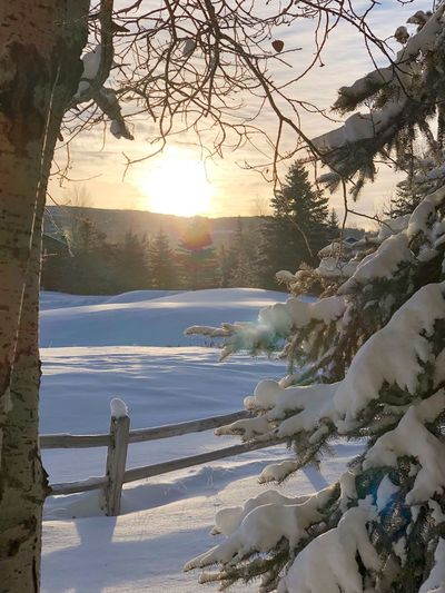 Winter Wonderland Golfcourse Wooden Fence Winter Wonderland Wintertime Winter Framed View Sunrise Snow White Color Winter Cold Temperature Snow Tree Nature Beauty In Nature Tranquility Tranquil Scene Scenics Frozen No People Sunlight Sun Outdoors Ice Landscape Branch Sky