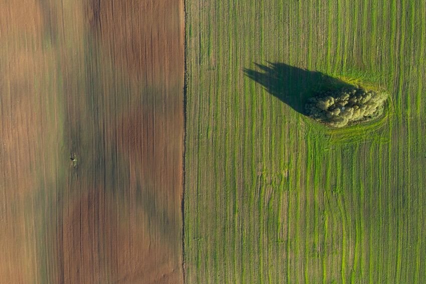 Boundary Green Color No People High Angle View Animal One Animal Nature Day Plant Pattern Full Frame Field Land Directly Above Outdoors Growth Grass Agriculture Sunlight