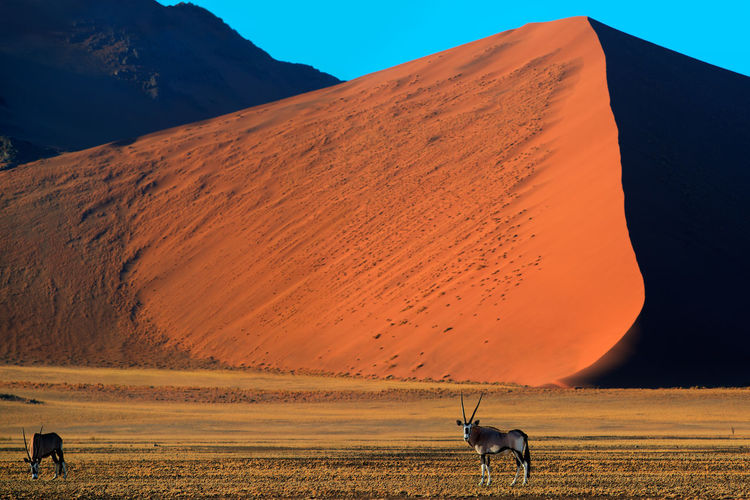 Oryx grazing on field against mountain