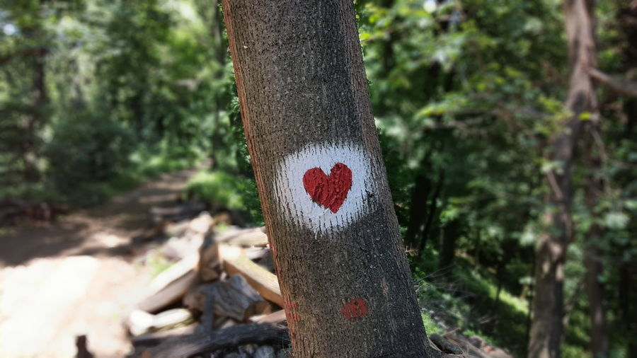 Tree Heart Forest Wood Trail Forestwalk Painted Wood Red White Wood Chops Forrest Trail Fruška Gora Market Reviewers' Top Picks
