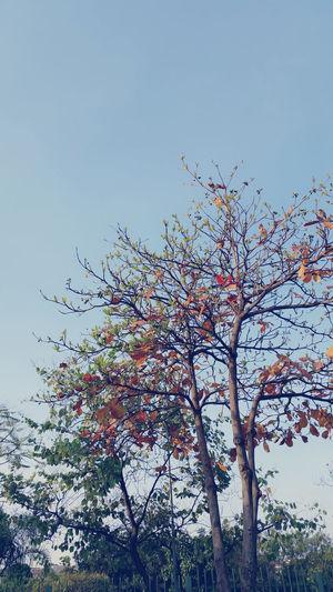 NaturezaBela Photo♡