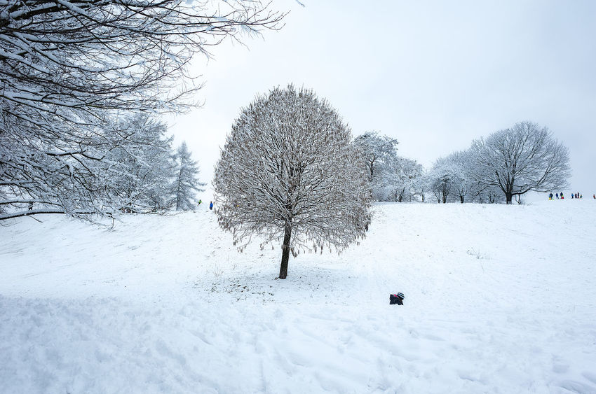 Winter Sledge Sliding Snow ❄ Bare Tree Beauty In Nature Cold Temperature Day Nature No People Outdoors Scenics Sky Snow Tranquility Tree Weather White Color Winter