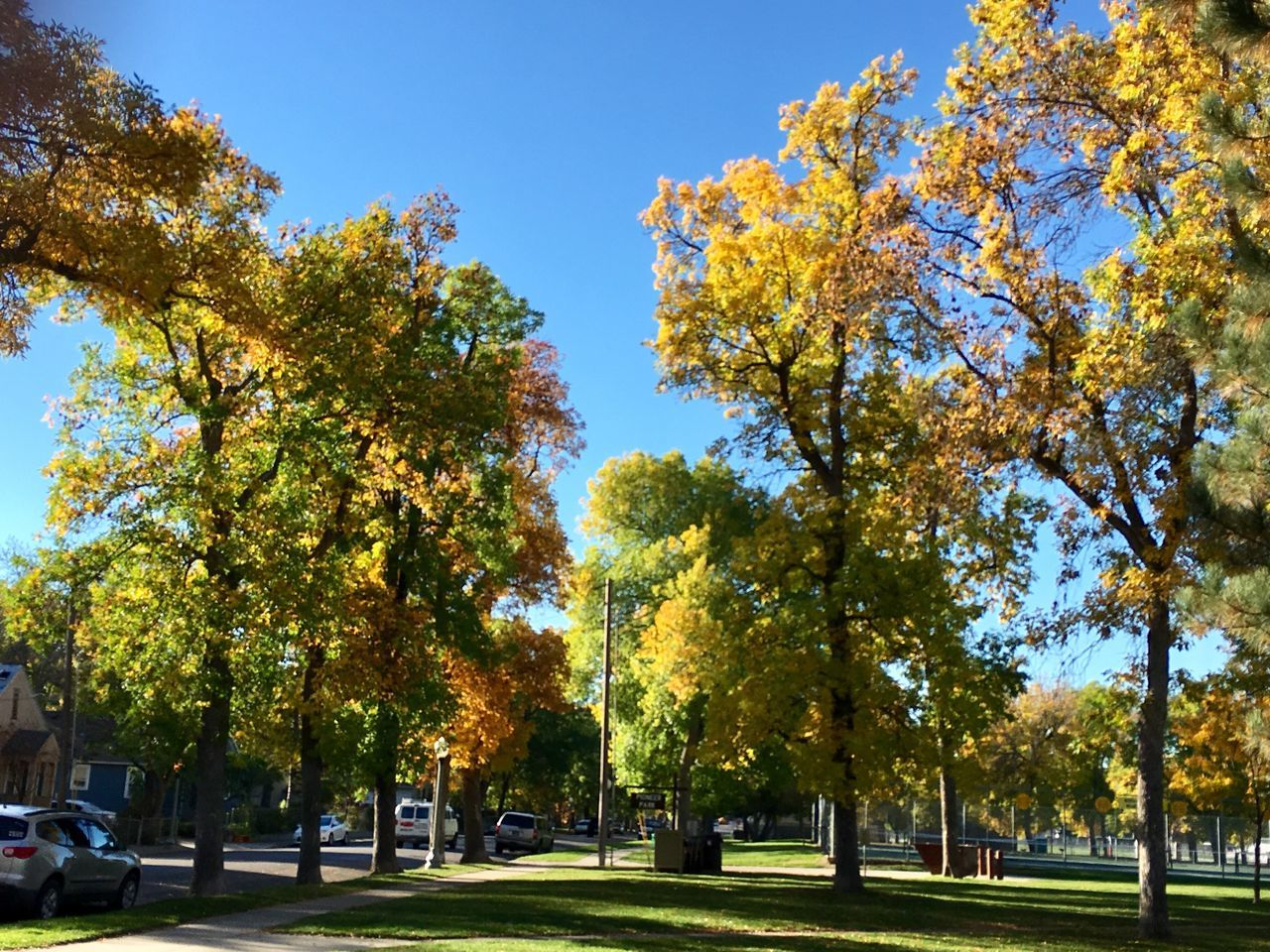 tree, autumn, leaf, nature, growth, change, day, beauty in nature, tranquility, park - man made space, outdoors, scenics, tranquil scene, sunlight, branch, no people, sky, clear sky
