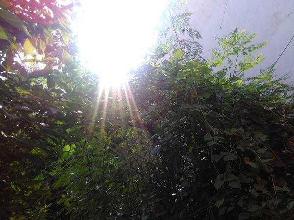Sunlight Tree Nature