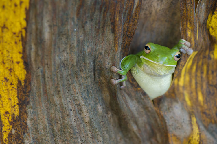 Close-up of frog on tree trunk