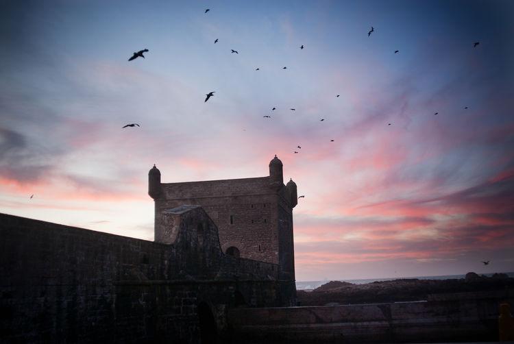 Birds flying over old building against sky during sunset
