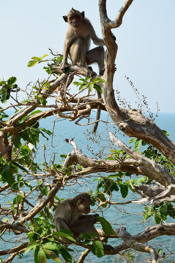 Low angle view of monkey sitting on tree against clear sky